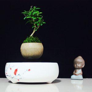Bonsai bay lơ lửng trong không gian